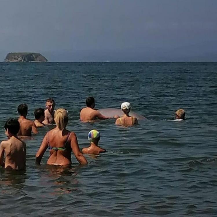 Ещё бы сверху сели: в акваторию Владивостока заплыла любознательная белуха