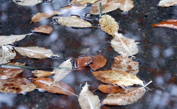 Дожди и резкое похолодание: погода в Новосибирске на неделю с 20 сентября