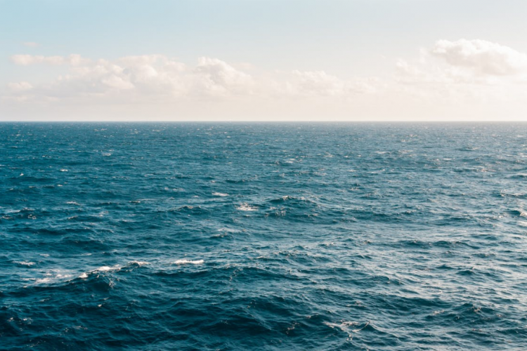 Приморцы поймали в воде маленьких «пришельцев»