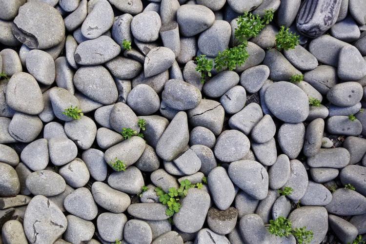 В премьера Канады бросили камни