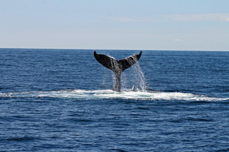 «И без мамы»: одинокого китёнка заметили в Приморье