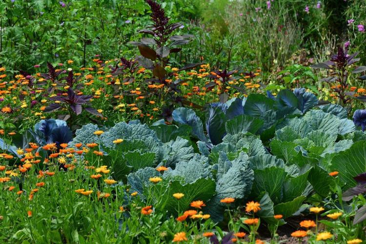 «Его хочется обнять»: приморцы нашли на грядке необычной формы овощ