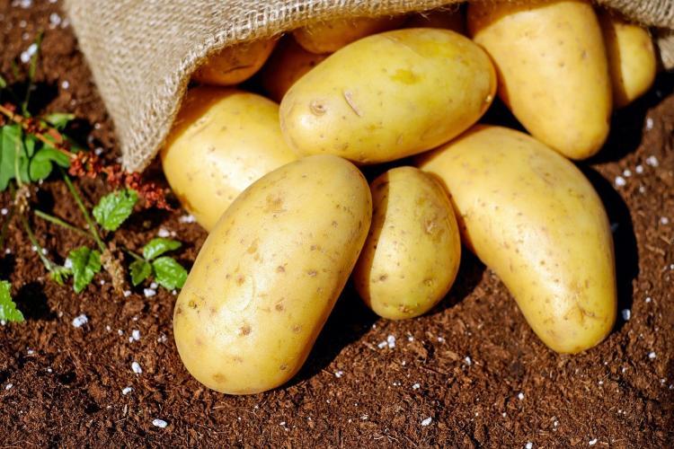 Диетолог перечислила самые вредные блюда из картофеля
