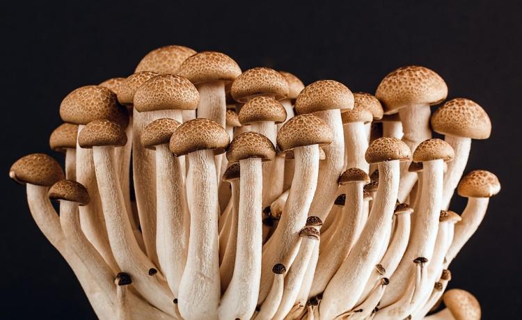 Названы неожиданные свойства грибов
