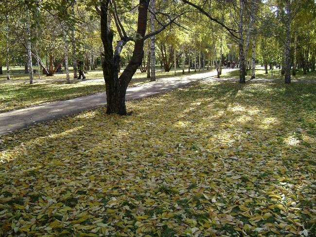 Похолодание и мокрый снег обещают синоптики 11 октября в Новосибирской области