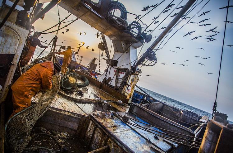 Приморские рыбаки выловили более 400 тысяч тонн минтая