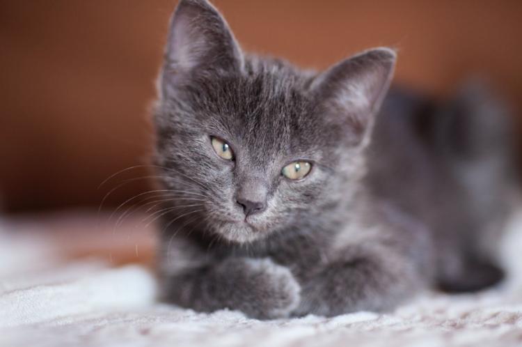 В Приморье дети издевались над телом котенка