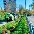 Во Владивостоке появляются новые аллеи и зелёные уголки